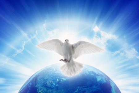 White dove symbol of love and peace flies above planet Earth. Elements of this image furnished by NASA