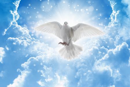 天から聖霊鳥ハエ空、明るい光輝く、- 愛と平和の象徴の白い鳩が空から降りて 写真素材 - 75680483