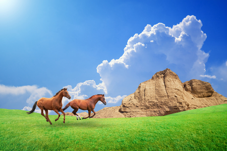 beautiful weather: Two brown horses run through green meadow. Beautiful sunny weather with blue sky, white clouds and bright sun Stock Photo