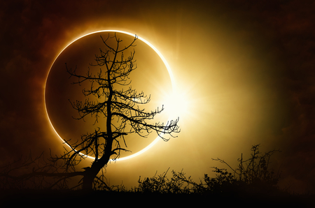 Amazing scientific background total solar eclipse, mysterious natural phenomenon when Moon passes between planet Earth and Sun, silhouette of withered tree