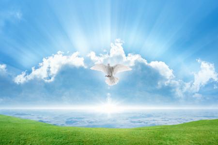 Heilige geest vogel vliegt in de lucht, fel licht schijnt uit de hemel, witte duif symbool van liefde en vrede komt uit de hemel, groen gras op lente weide
