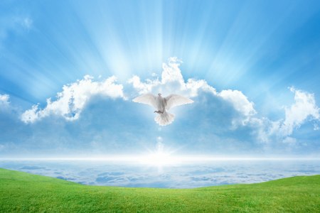 Holy spirit bird flies in skies, bright light shines from heaven, white dove symbol of love and peace descends from sky, green grass on spring meadow
