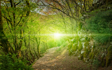Bright light of hope in end of way. Footpath in green forest.