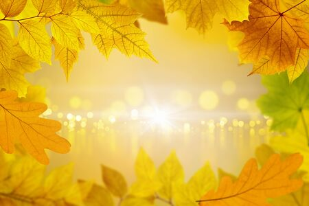Beautiful seasonal background -  yellow, orange and red maple leaves, season is fall. In center of frame are blurry luminous circles with reflections.