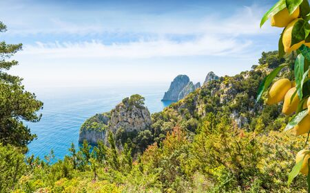 Famous Faraglioni Rocks buried in verdure, Capri Island, Italy. Paradise landscape with azure sea, ripe yellow lemons in foreground. Island of Capri is situated 5 km from mainland in Bay of Naples.