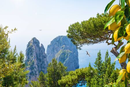 Welcome to Capri concept. Famous Faraglioni Rocks near Capri Island, Italy. Beautiful paradise landscape with azure sea in summer sunny day and ripe yellow lemons.