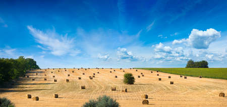 Panoramic view of farmland with wheat straw bales after harvest in Ukraine. Photo was taken in summer on bright sunny day with blue sky and light white clouds.