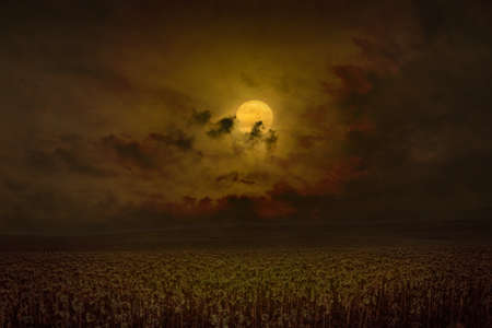 Dark dramatic mystical image with glowing full moon rises above field of sunflowers.