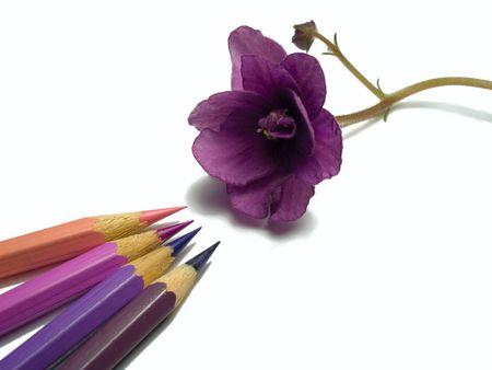 Nahaufnahme von Veilchen bl�hen und Stifte isoliert auf wei�em