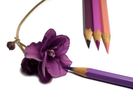 close-up of violet flower and pencils isolated on white Stock Photo