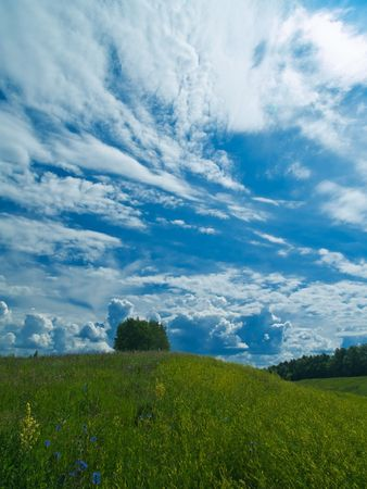 summer landscape with green grass meador and blue clouds Stock Photo - 1179276