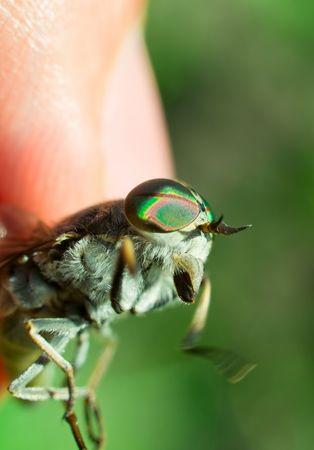 facet: human fingers and gadfly facet eye closeup. shallow dof
