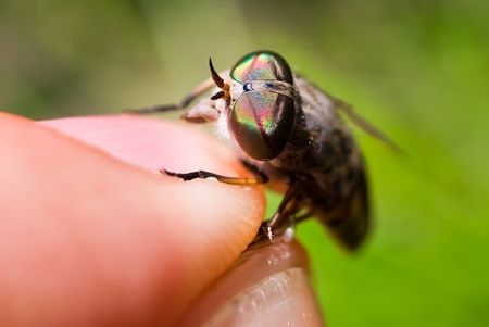 gadfly: human fingers and gadfly facet eye closeup. shallow dof