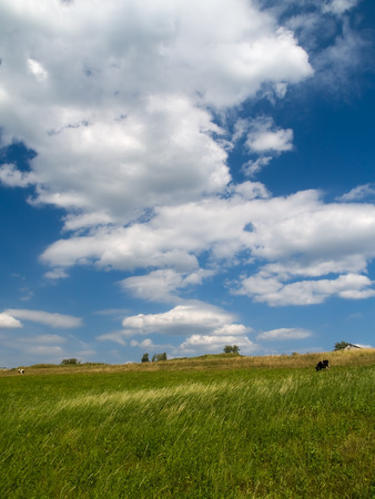 summer landscape - blue sky with clouds, green meadow with cows Stock Photo - 1584497