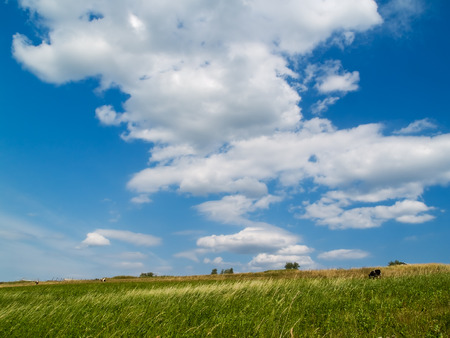 summer landscape - blue sky with clouds, green meadow with cows Stock Photo