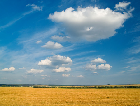 bright rural landscape with yellow fields and blue sky