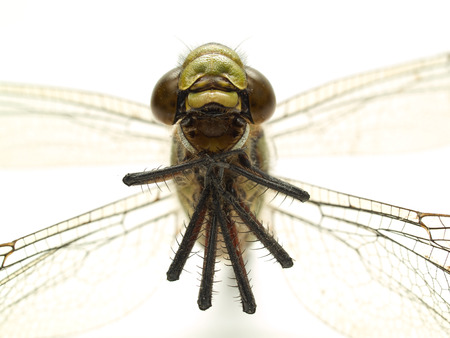 head part of dragonfly isolated on white close-up Stock Photo - 1592723