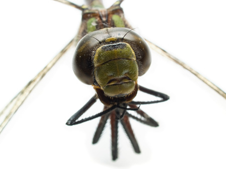 head part of dragonfly isolated on white close-up Stock Photo - 1592719