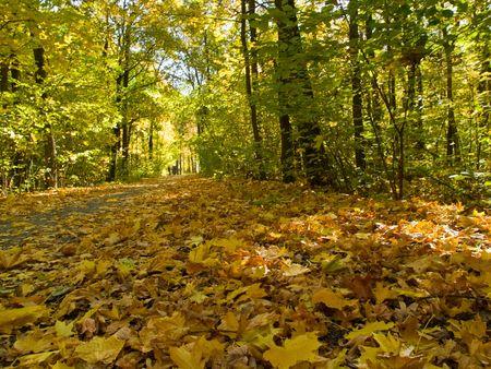 autumn park scene with trees, fallen yellow leaves Stock Photo