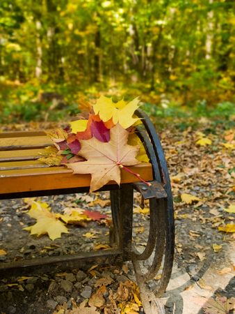 park bench with autumn maple leaves close-up photo