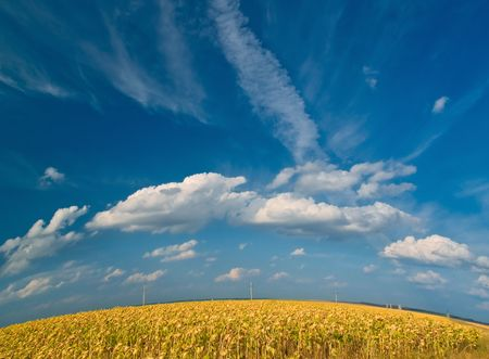 summer landscape with meadows and blue sky. earth spere Stock Photo - 2607901