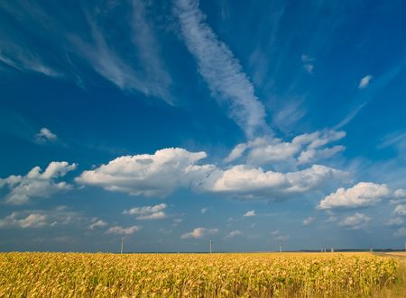 summer landscape with meadows and blue sky Stock Photo - 2639299