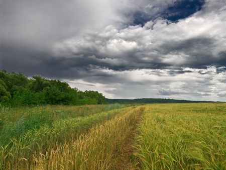 summer landscape with wheat field sky and clouds Stock Photo - 3418065