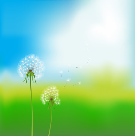 vector image. two dandelions over blurred summer background Vector