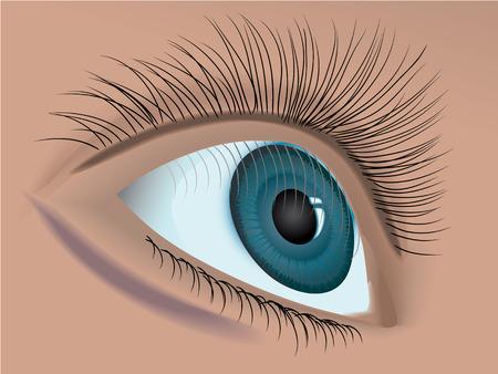 woman eye closeup vector Vector