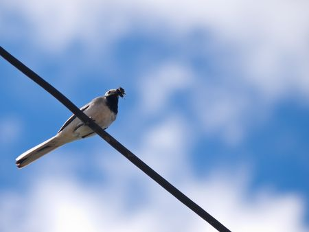 bird sitting on wire over blue sky closeup photo