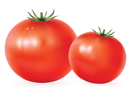raw food: shiny tomatoes isolated on white vector