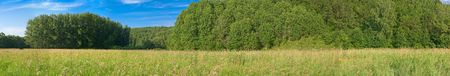 panoramic summer landscape with grass trees and blue sky Stock Photo - 5243879