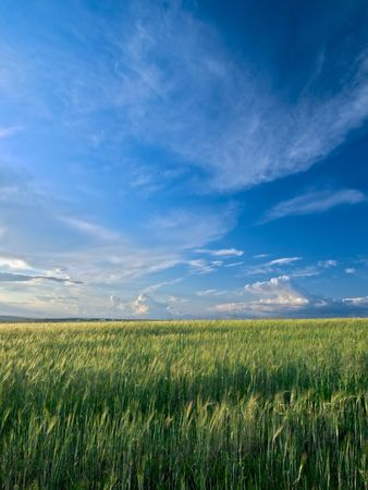 summer landscape with green grass meadows and blue sky Stock Photo - 5415424