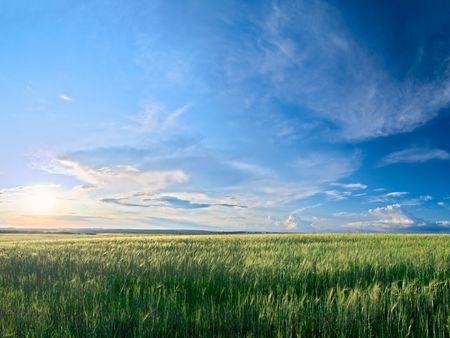 summer landscape with green grass meadows and blue sky
