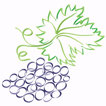 grape with leaf vector sketch image