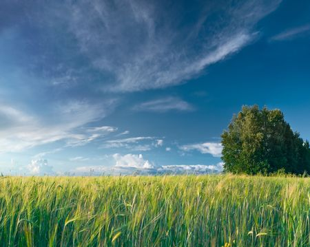 summer landscape with meadow, grass and blue skies with clouds Stock Photo - 6719294