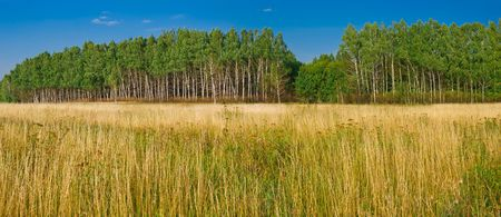 yellow meadow and green forest landscape. panoramic Stock Photo - 6719289