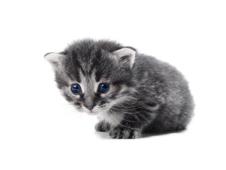 cute kitten isolated over white shallow dof