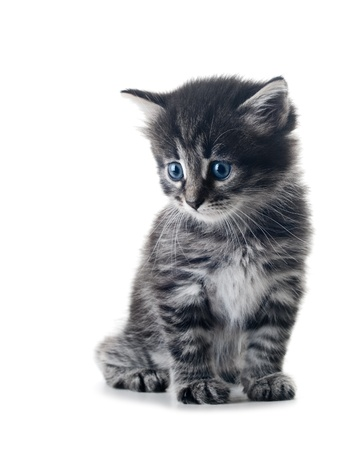 cute little kitten isolated over white shallow dof Stock Photo