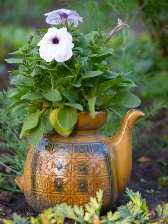 petunia flowers in old pot outdoors closeup photo