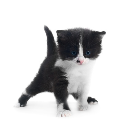cute kitten isolated over white closeup