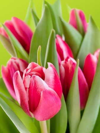 bunch of tulips over green background. Stock Photo - 12863215