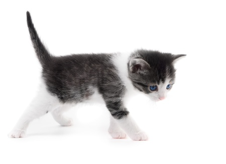 black and white kitten isolated on white background Stock Photo