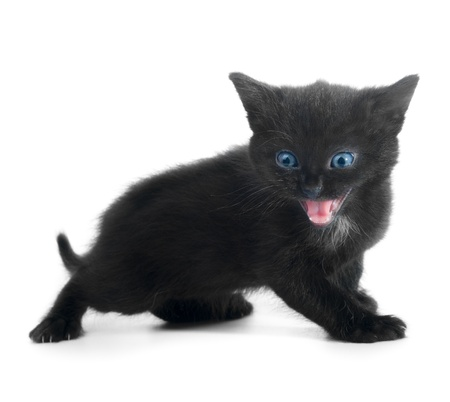 black kitten with blue eyes isolated on white background photo