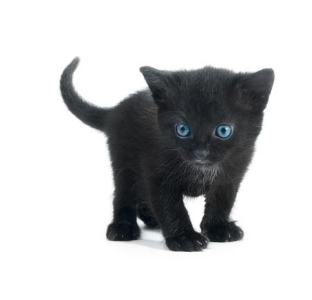 black kitten with blue eyes isolated on white background Stock Photo