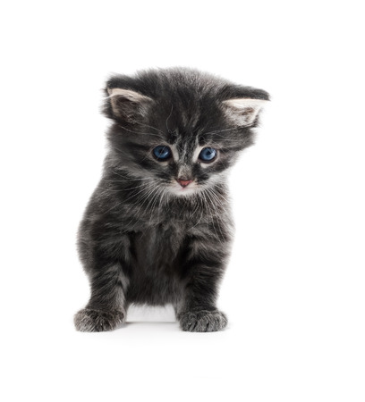 little cute kitten icolated on white background shallow dof Stock Photo