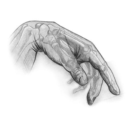 terapia ocupacional: dibujo a l�piz de la mano humana. ilustra el interior y exterior de la anatom�a de la mano. ideal para usos en materia de rehabilitaci�n y terapia ocupacional  Foto de archivo