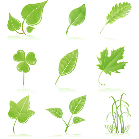 reservations: Vector clip art of a variety of fresh, green, growing, leaves and grass blades.  Drawn free hand in Flash - not a trace
