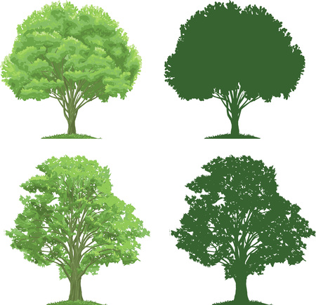 vector clip art of an ecologicaly green, strong trees. Silhouettes are also included. .  Drawn free hand in Flash - not a trace