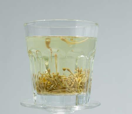 japonica: Lonicera japonica